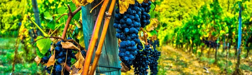 Wein-Geschenkideen von Borgo Magredo aus Italien